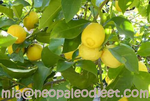 Spaanse citroenen
