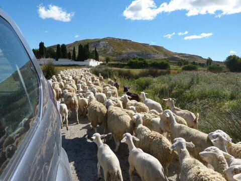 Hoe geraak je in Orce, Andalusie met de auto