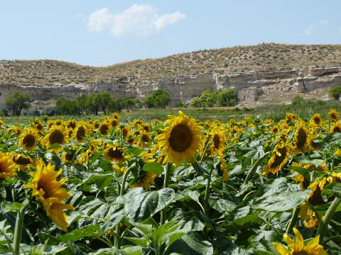 Zomer in Orce