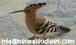 Vogels kijken Spanje